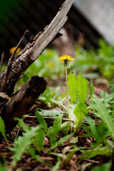 05-06-2010 weeds_0002