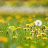 05-06-2010 weeds_0008
