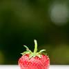 06-21-2010 berries_0132 as Smart Object-1