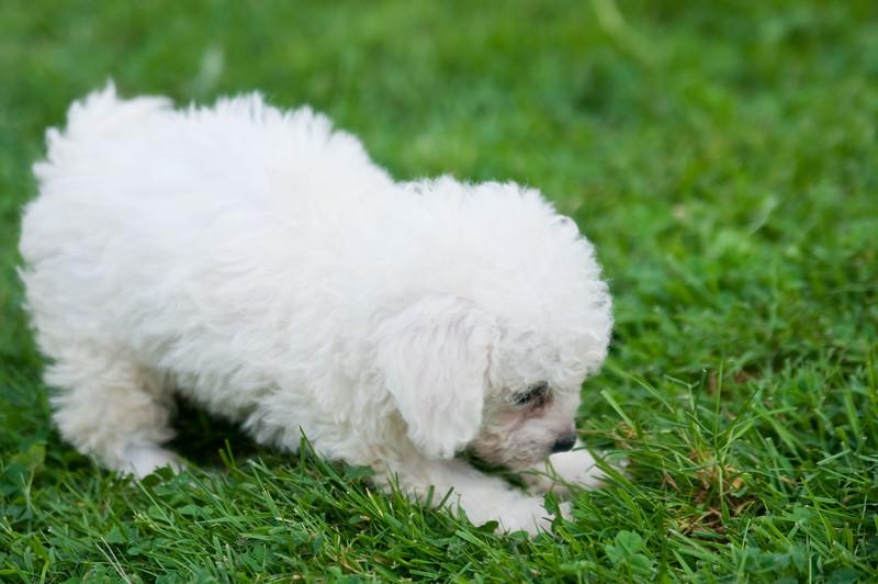 08-02-2010 jess's dog & the blimp_0009