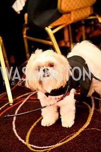 Photo by Tony Powell. The Washington Humane Society Bark Ball. Hilton Hotel. June 5, 2010. Dolce