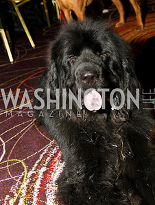 Photo by Tony Powell. The Washington Humane Society Bark Ball. Hilton Hotel. June 5, 2010. Cyrus