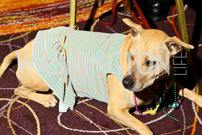 Photo by Tony Powell. The Washington Humane Society Bark Ball. Hilton Hotel. June 5, 2010. Faith Buttercup