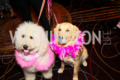 Photo by Tony Powell. The Washington Humane Society Bark Ball. Hilton Hotel. June 5, 2010. Bella and Nina