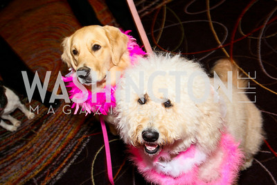 Photo by Tony Powell. The Washington Humane Society Bark Ball. Hilton Hotel. June 5, 2010. Nina and Bella