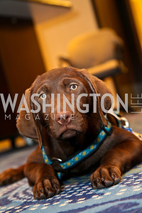 Photo by Tony Powell. The Washington Humane Society Bark Ball. Hilton Hotel. June 5, 2010.