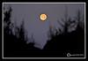 Moon at Rye Beach