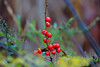 Berries-10-28-01
