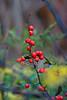 Berries-10-28-02
