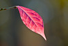 Autumn Leaves at Bellamy River Wildlife Sanctuary