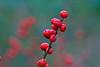 Berries-10-28-03