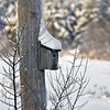 Bird House on Bayview rd
