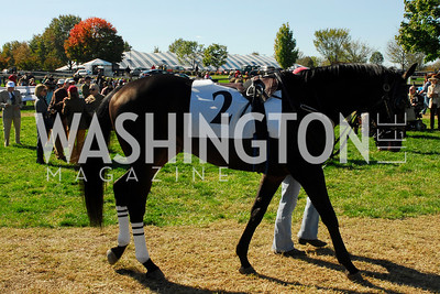 Kyle Samperton, October 16, 2010, Fall Gold Cup,