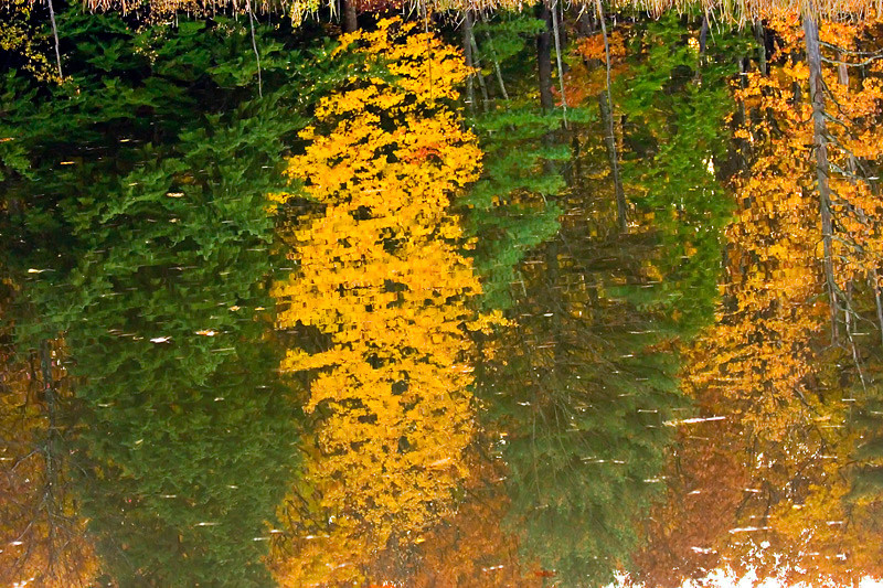 Autumn Reflection at Great Bay National Wildlife Refuge
