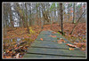 Foot Bridge-11-10-02cr
