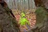 Fallen Tree-11-10-01