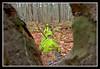 Fallen Tree-11-10-01cr