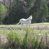 What color was the white horse at mile 6.35?