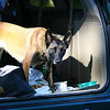 Babe guardingthe van...a vert sweet dog, really!