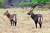 2010 Rwanda-02-akagera-np-110_14945303330_o