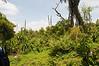2010 Rwanda-10-karisoke-trek-76_14945585370_o
