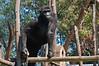 2010 Rwanda-13-mgvp-orphanage-09_15129343071_o