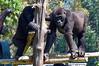 2010 Rwanda-13-mgvp-orphanage-13_14945679560_o