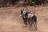 2010 Rwanda-02-akagera-np-111_14945255929_o