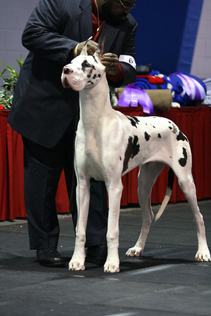 Bred by Exhibitor Dogs
