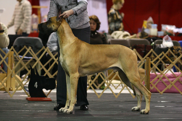 American Bred Dogs