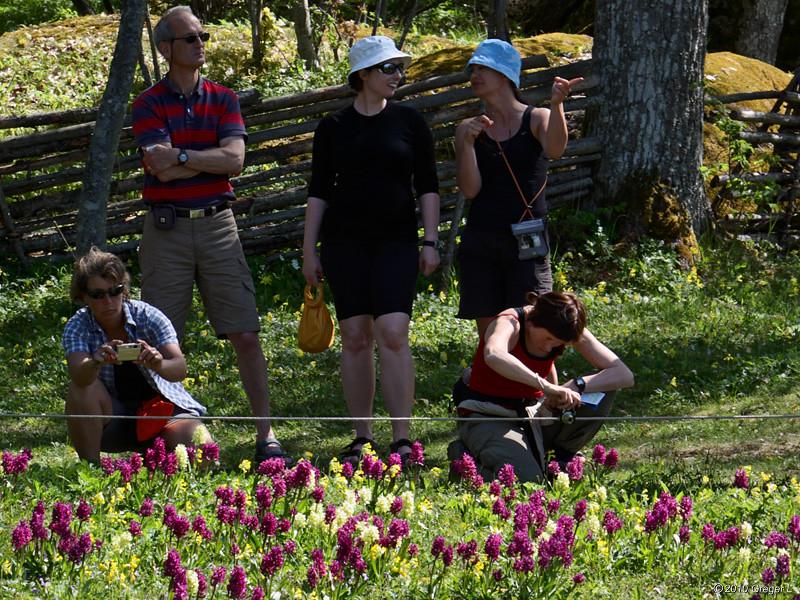 Orkidéfotografer