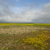 Wildflowers and partly cloudy skies on the Carrizo plain.