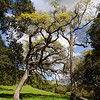 Trees towering over the Maguire Peaks trail, at the Sunol Regional Wilderness.
