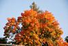 11-06-10 LaPorte-Quincy-Fall Colors