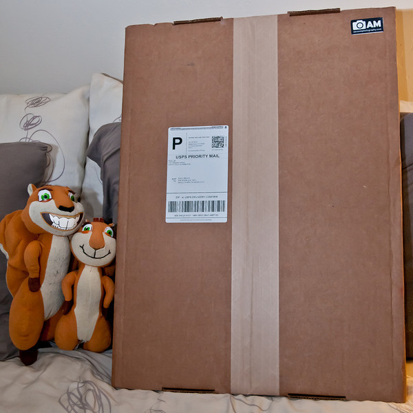 "Here you can see my pets (Hammy and Brenda, from  the movie ""Over the Hedge"") introducing my first set of prints from Bay Labs, via SmugMug.   SmugMug offers Bay Labs prints as part of their printing options for their Professional account holders. Since I just upgraded to a Pro account I no longer have to use EZ Labs! EZ Labs printed and mailed all their photos in round tubes, but Bay Labs photos come in a flat box, which was super fancy.   Once I cut the tape, the box folder out and had the photos inside. I ordered one 11x16 Giclée canvas board print and 2 of my photos as 12x18 prints on Kodak Lustre paper.   You can also see that SmugMug has my ""AM Photography"" logo branding on the packaging so people know where it came from!"