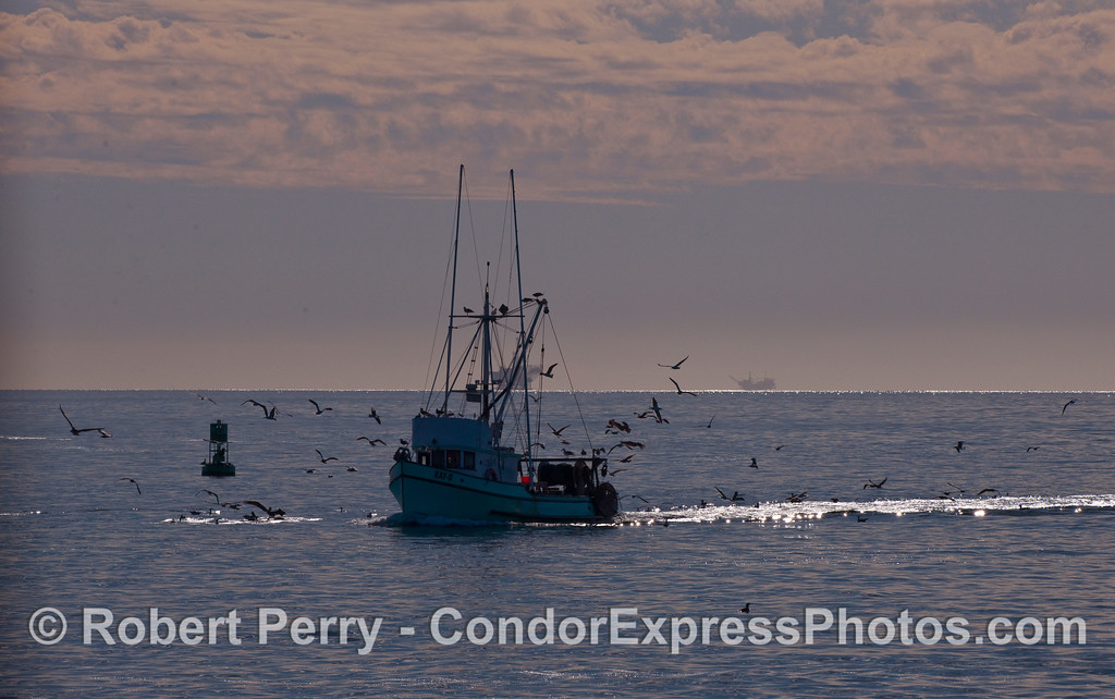 The fishing vessel Kay-D returns to Santa Barbara Harbor.