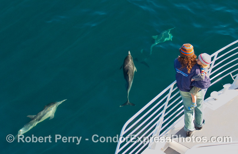 A very young whaler and mom on board the Condor Express get a close visit by some Common Dolphins (Delphinus capensis).