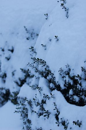 2010-01-30 Snow