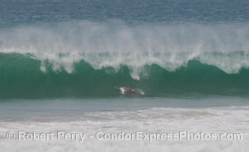 """When I said, """"in the surf zone,"""" I meant it!  (image 2 of 2)"""