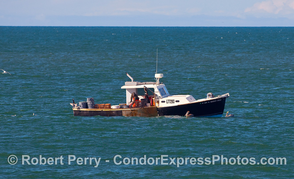 "Commercial lobster fishing boat ""March Gale."""