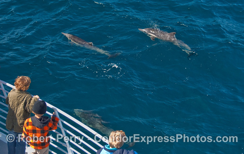 Junior Whalers enjoy some friendly Commons Dolphin (Delphinus capensis).
