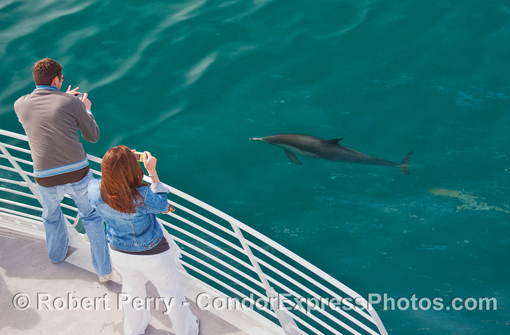 A couple of whalers photograph a friendly Common Dolphin (Delphinus capensis).