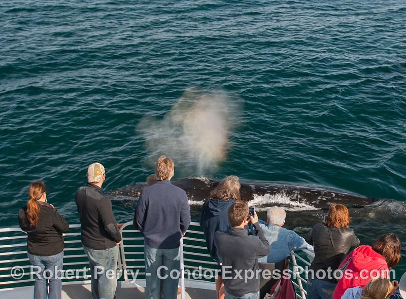 Whalers on the Condor Express get wet.