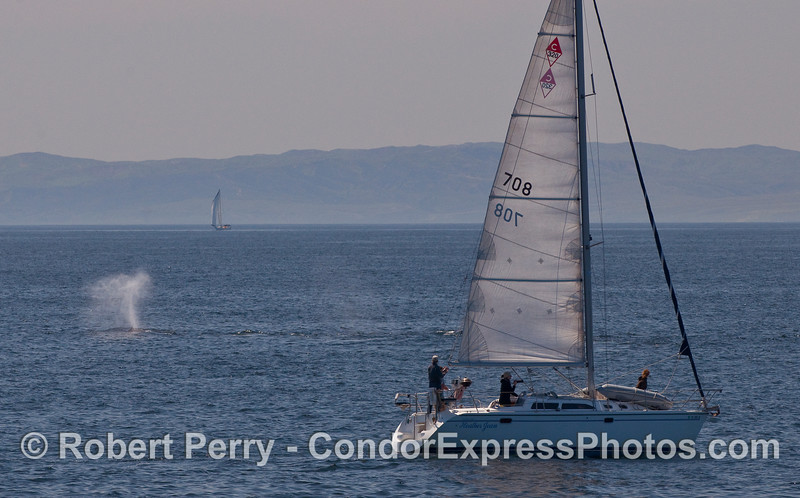 """The sailboat """"Heather Jean"""" breaks out the cameras to capture a few Humpback Whale (Megaptera novaeangliae) shots."""