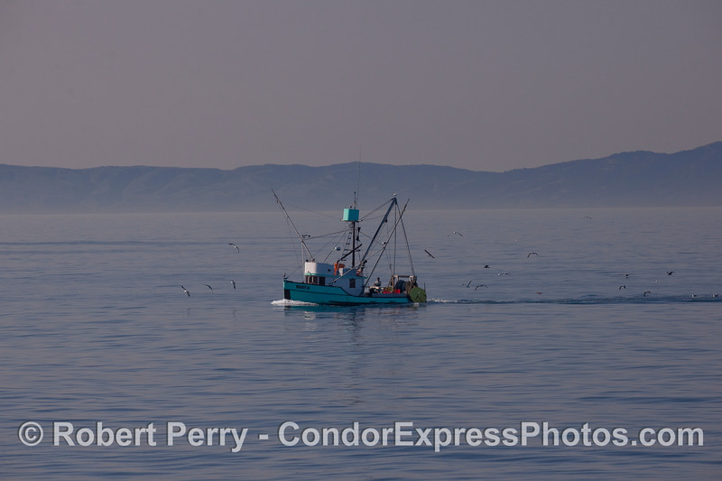 "The trawler ""Mary-K"" and its entourage of gulls."