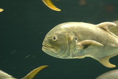 2010-03-29 Atlanta Aquarium