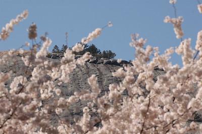 2010-04-01 Stone Mountain