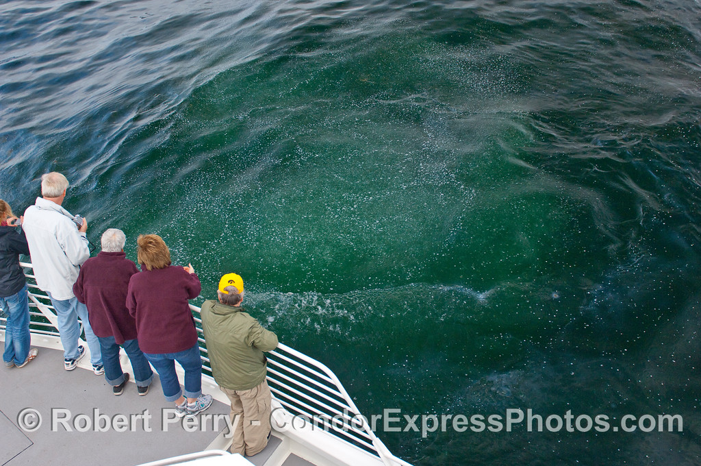 Whalers on the Condor Express get a first hand look at a natural oil and gas seep in the Santa Barbara Channel.