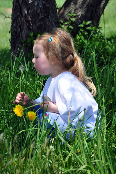 Rayna blowing the dandelion seeds in a field at Saddle Rowe.