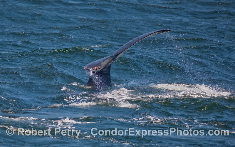More windy tail flukes.